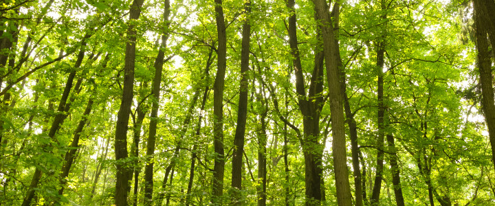 The Truth: How Trees Help Fight Climate Change